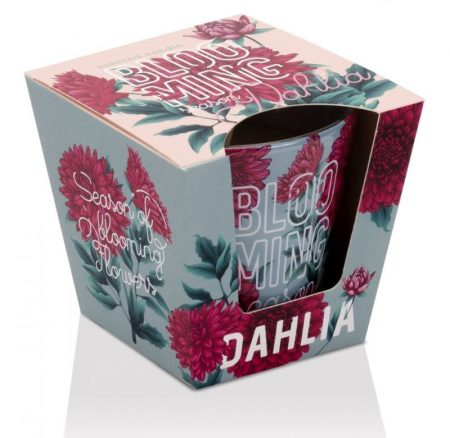 Blooming Season Dahlia poharas illatgyertya 115g